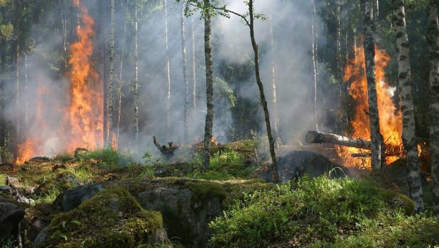amazonas fuego