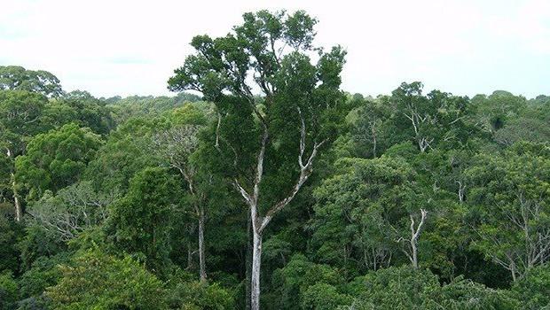 ep bosques naturales en la amazonia
