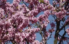 ep buen tiempo clima altas temperaturas temperatura primavera primaveral